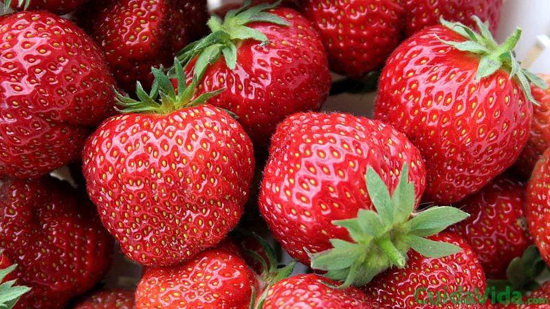 fresas-afrodisiaco