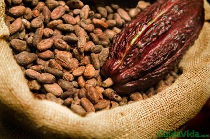 semillas chocolate