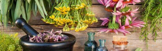 ¿Son seguras las plantas medicinales?