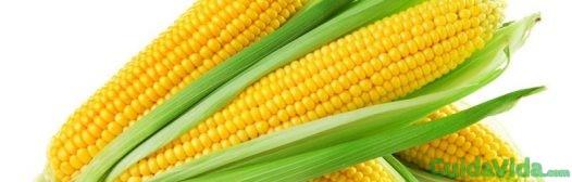 maiz mazorca