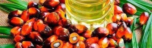 Es aceite de palma bueno para la salud